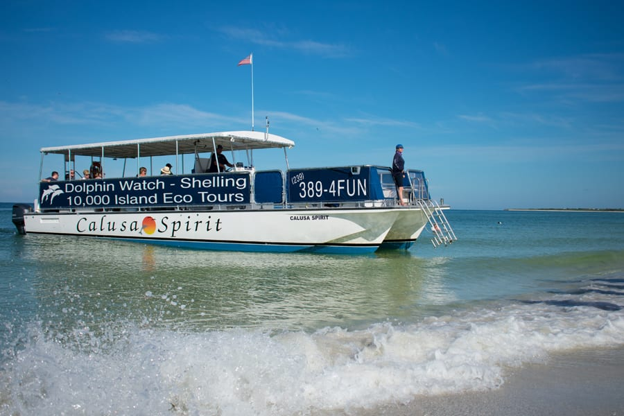 Shelling Excursions and Dolphin & Manatee Eco-Tours